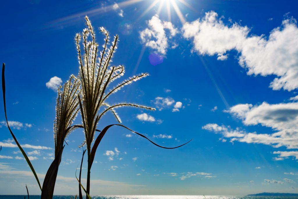 仁右衛門島の風景5