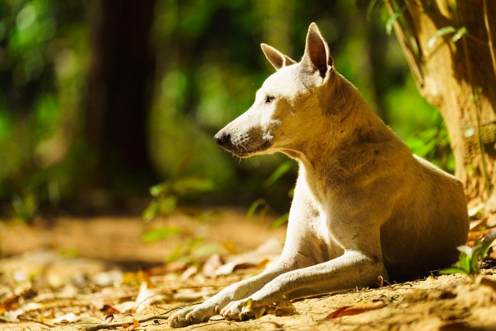 クバルスピアンの案内犬
